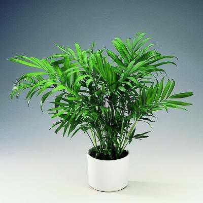 Растения подходящи за озеленяване на тъмни офиси