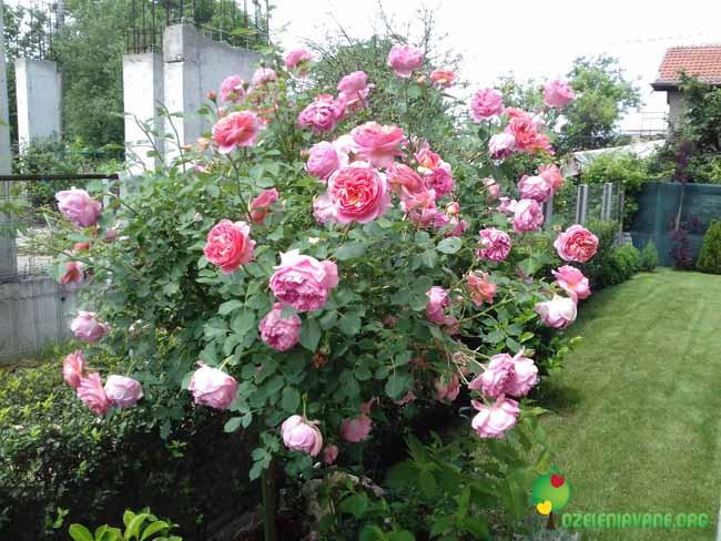 Поддържане на декоративна растителност